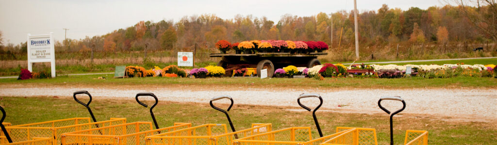 Garden Mums on a Truck and carts